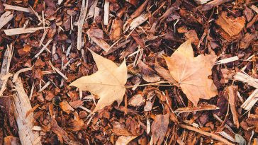 How to rake leaves out of mulch