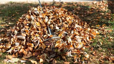 How to shred leaves for compost