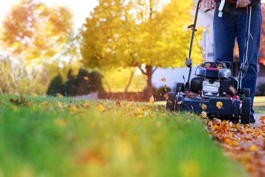 Mow leaves frequently