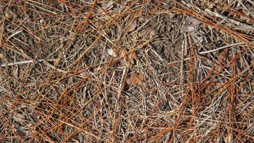 How to get pine needles out of mulch