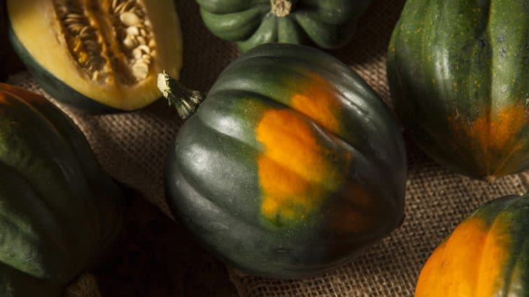 How do you know when to pick acorn squash?