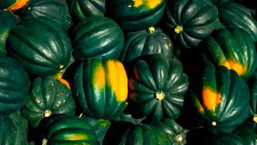 Growing acorn squash in containers